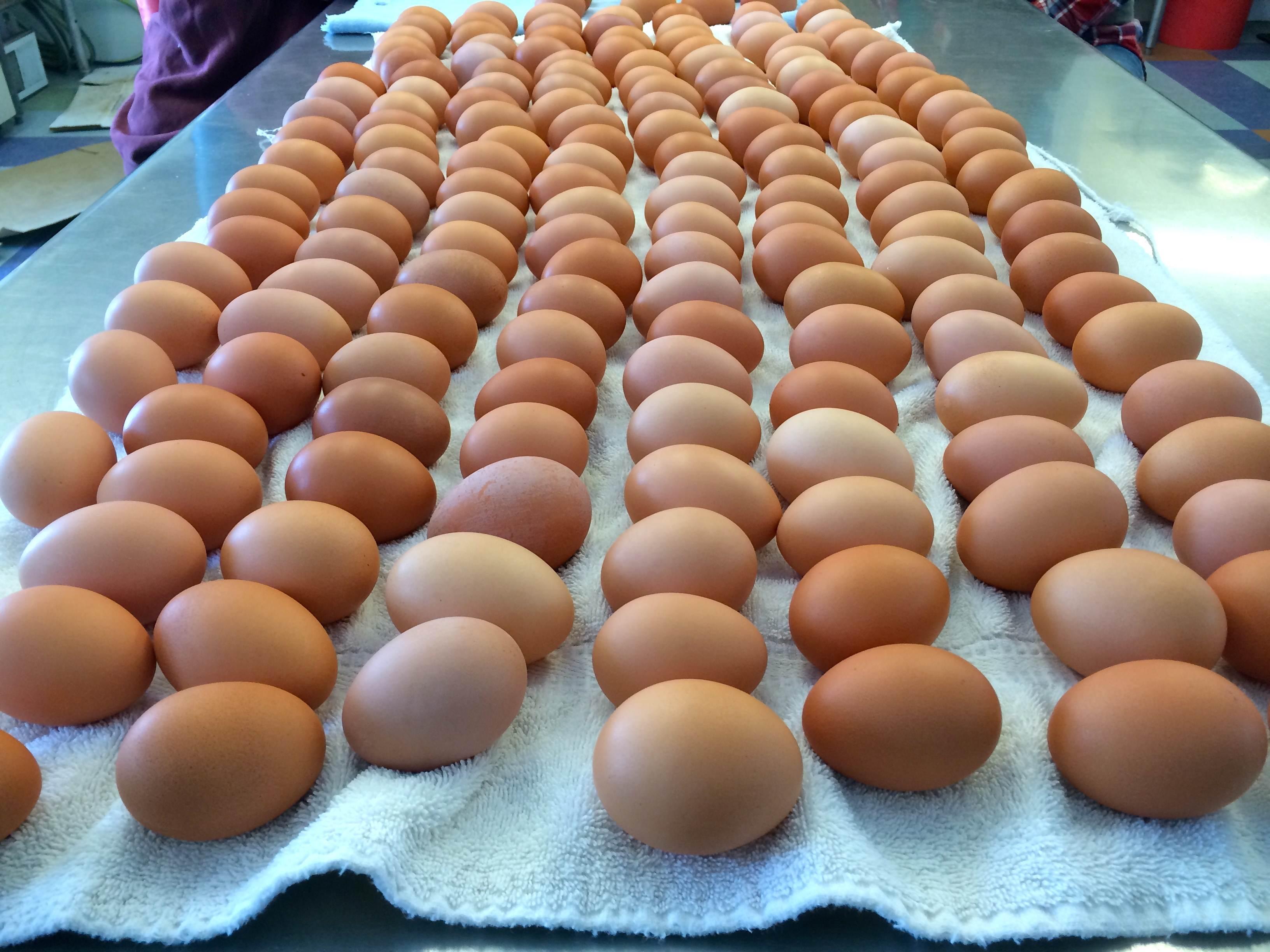 Egg Infinitum