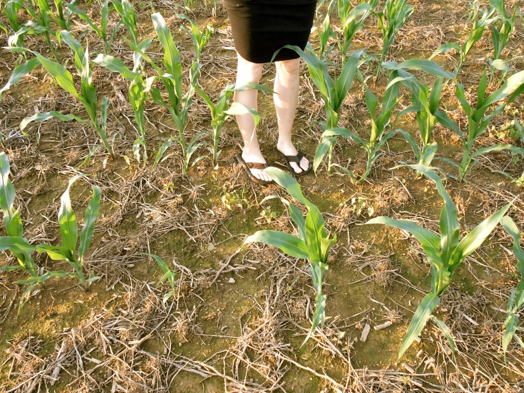 """Knee high by the 4th Of July"" and other patriotic thoughts within."